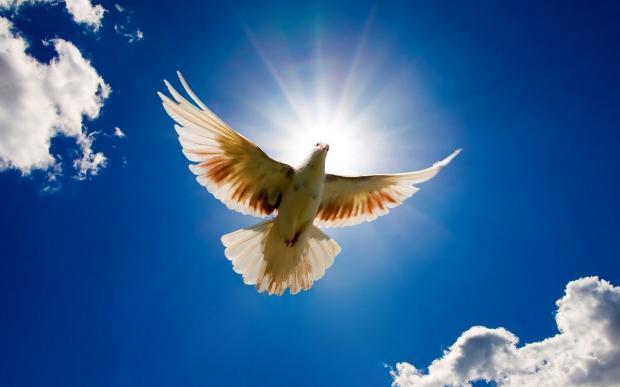 既让光来照亮,明耀信者之魂