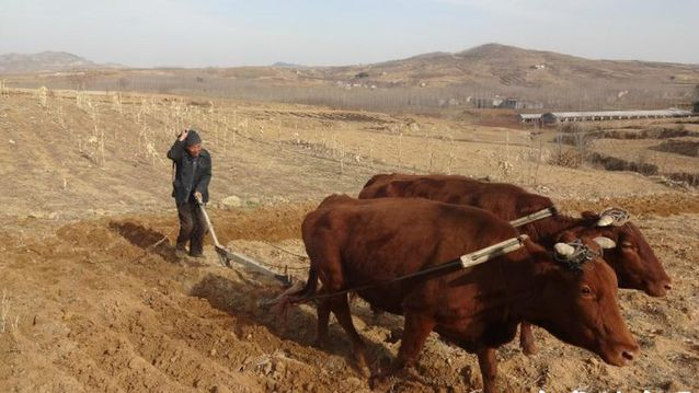 进口大米征税45%中国农业就安全了?