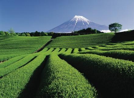 看日本如何还国民绿水青山(六)