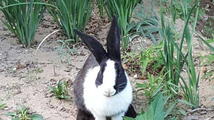 不要把兔子逼急了!……行政诉讼法实务谈之三十五