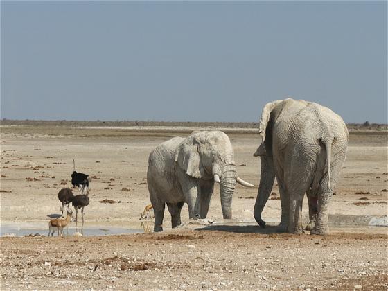来自纳米比亚的象牙:黑市卖一公斤240元,出国暴利40倍