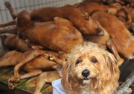 直击玉林狗肉节:对动物谈人道不奢侈