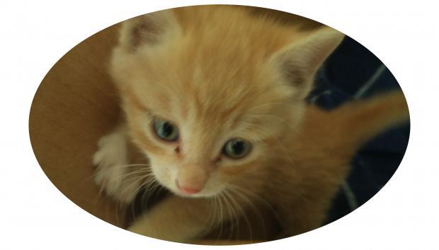 小黄猫寻家记
