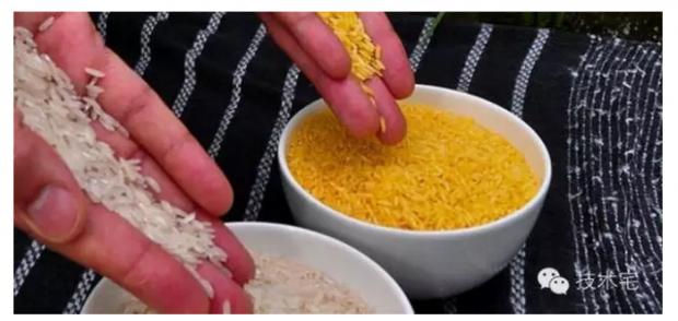 百余诺奖得主力挺的是在中国被妖魔化的黄金大米