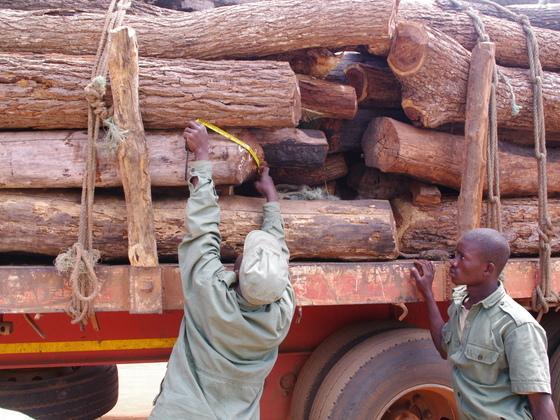 中国能帮莫桑比克挽救森林吗?