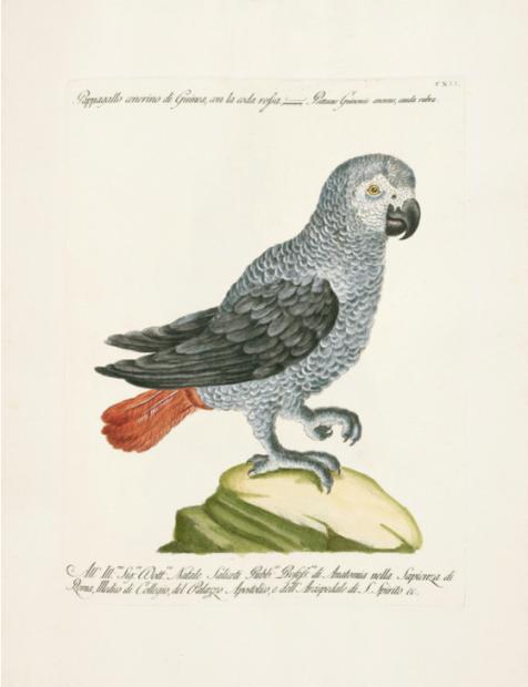 书评:神奇的鸟类