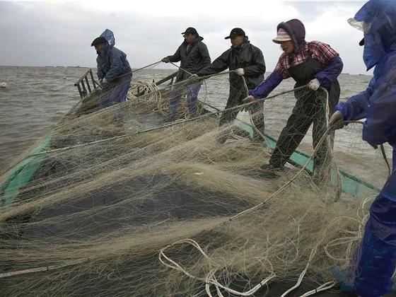万吨养殖鲟鱼威胁长江生态