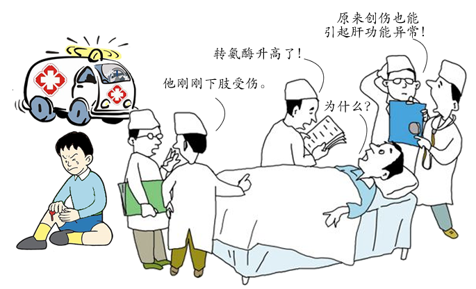 创伤也可引起肝功能异常