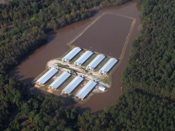 极端气候再次暴露美国工厂化养殖模式的脆弱性