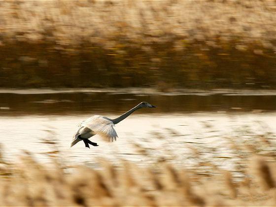 自然现代化:探询黄河三角洲自然保护区的历史