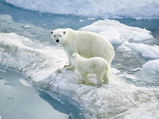 北极的冰川危情