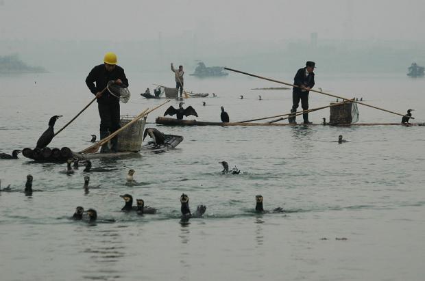 该不该在中国最大的淡水湖上建水闸?