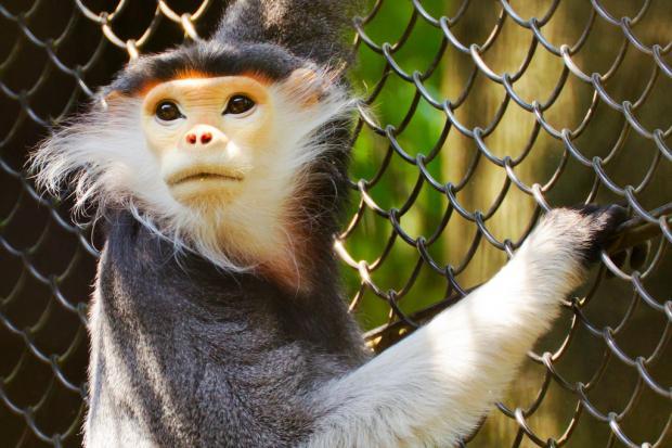 研究称60%灵长类动物濒临灭绝