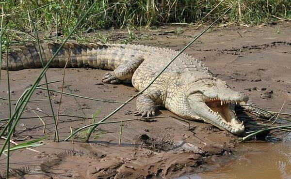 资本大鳄对散户吸血的时代结束了吗?