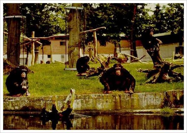 捍卫动物园