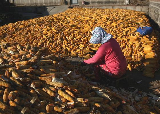 黑龙江立法禁种转基因粮食