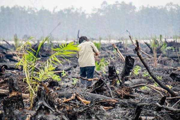 东南亚深陷生物多样性危机