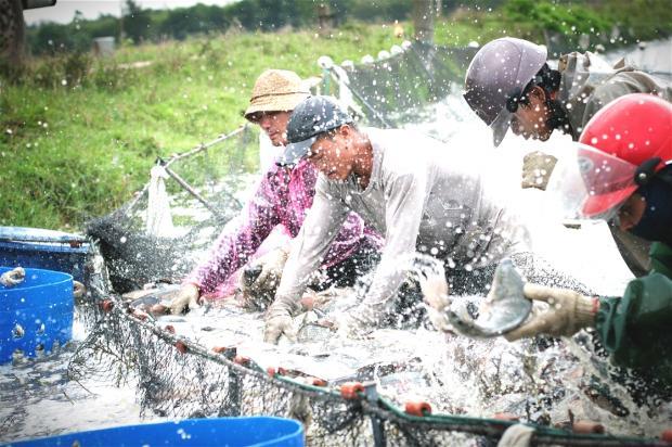 全球鱼荒下,中国水产养殖业如何转型?