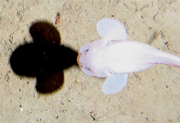 污染侵入马里亚纳海沟深海生物