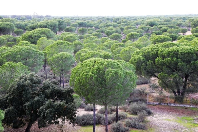 【西班牙】世外桃源,多南那国家公园