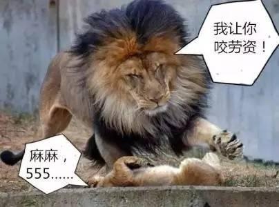 央妈监爸,勒紧房贷,狠抽北京房价