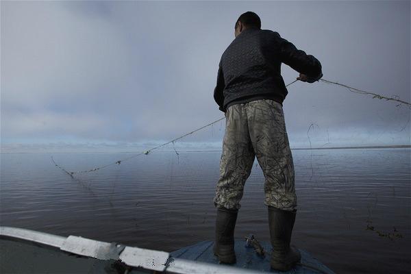 """全球渔业非法捕捞是如何被""""洗白""""的"""