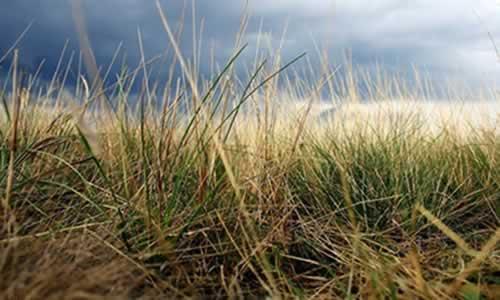 剔除心里那一片提供杂草成长的土壤