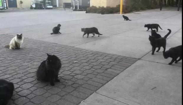 野猫饲养员
