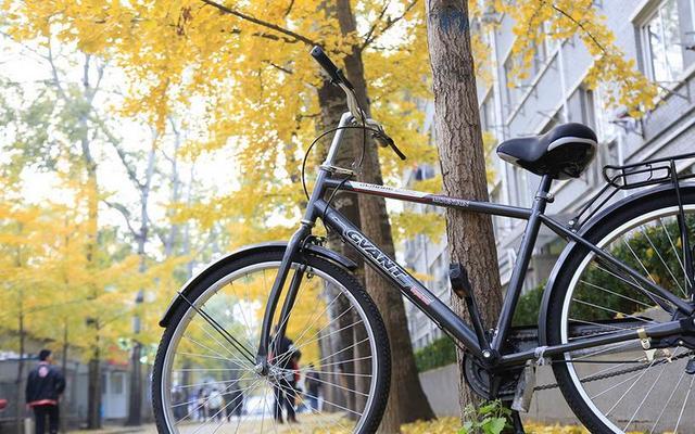 怎么到处都是单车,这种东西究竟是怎么赚钱的?