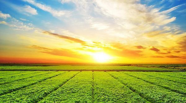 农民怎么会这么穷?农村的未来在何方?