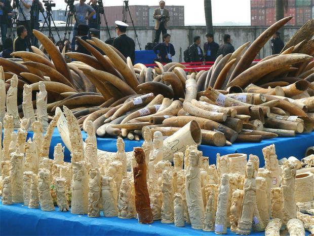 中国象牙禁售令效果显著