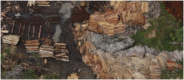 亚马逊森林砍伐程度再次上升 这次大企业有办法