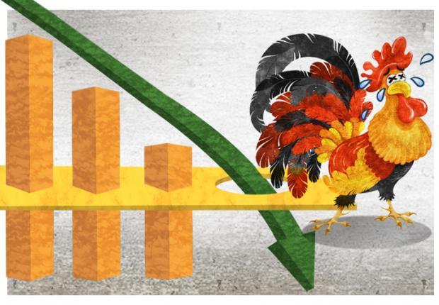 鸡肉价格大跌背后:白羽鸡生长周期缩短近半