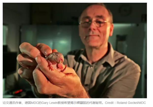 裸鼹鼠在缺氧环境下生存的秘密