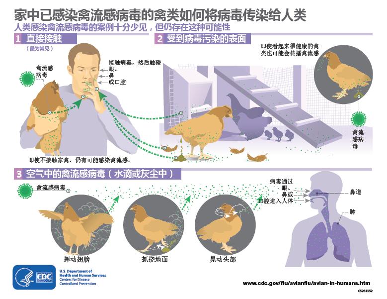 H9N2禽流感病毒对人类的威胁有多大?