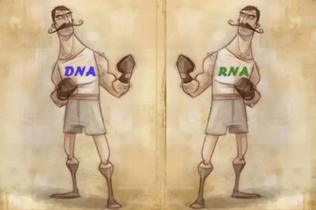 DNA vs. RNA:生命的信息流到底谁说了算?