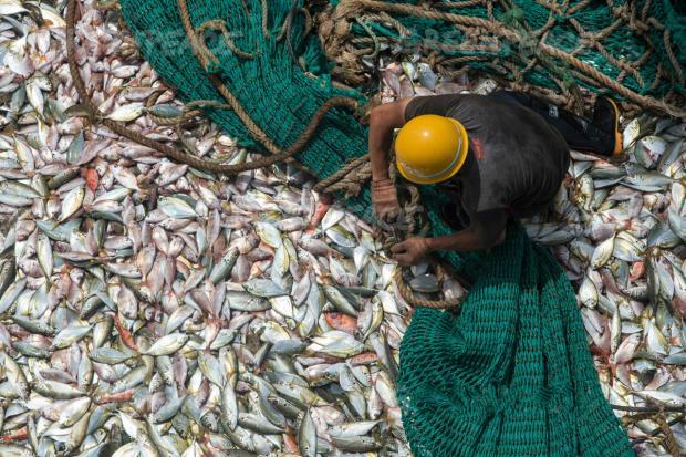 拿什么来拯救我们的海洋?
