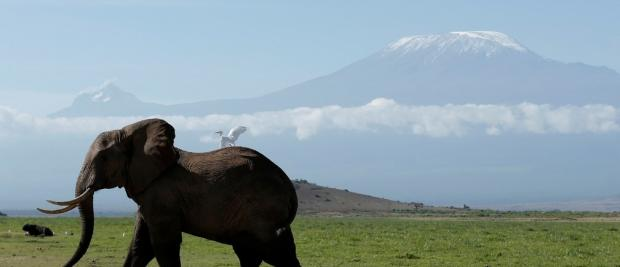 全球最大的象牙市场日益萧条之际,中国能否拯救大象?