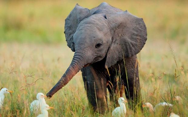 """留住大象,哪怕为了这些""""功利""""的理由"""