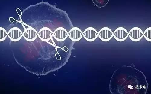 基因魔剪会跑偏?估值百亿的CRISPR突现信任危机