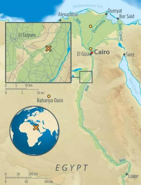 第一个可靠的古埃及木乃伊DNA研究透露了哪些信息?