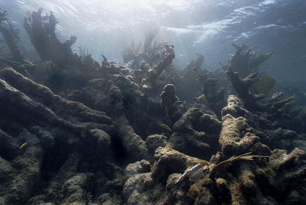 海洋污染影响全球,特朗普却要退出《巴黎协定》