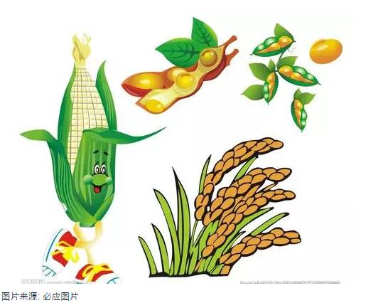 消失的玉米和大豆!气候变化与中国农业产出