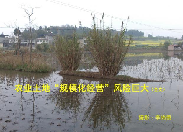 中国农业走规模化经营道路风险巨大(1)