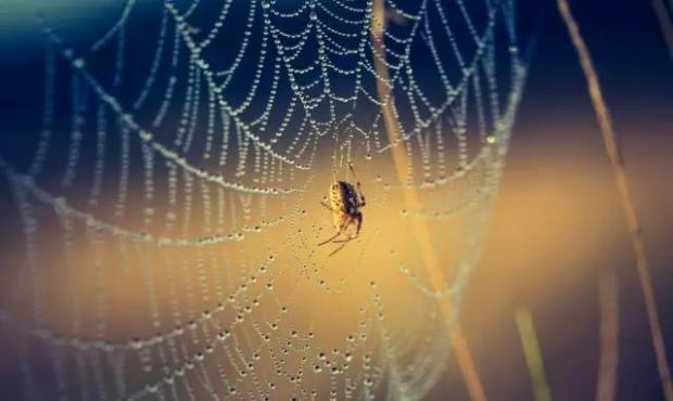 一只小虫怎样从被黏住的蜘蛛网上成功脱逃