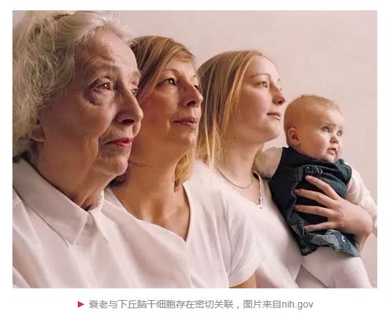 华人学者或揭开下丘脑与衰老间神秘关系的黑盒