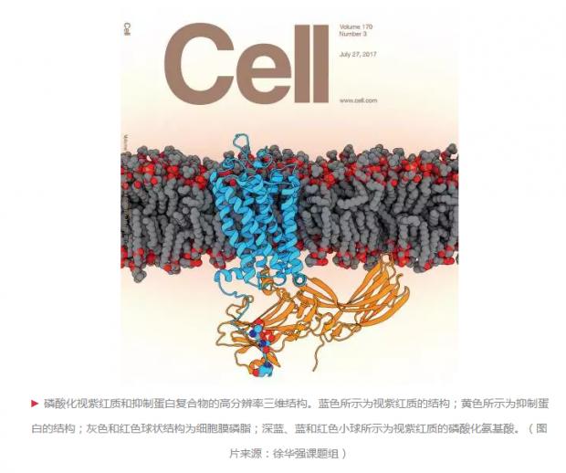 徐华强团队解决细胞信号传导领域重大科学难题