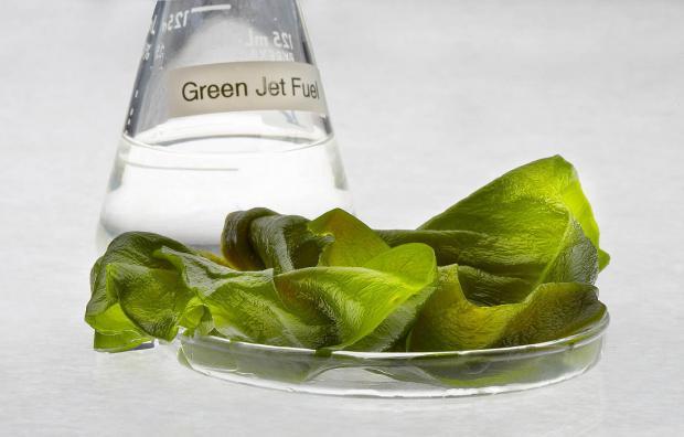 专家:藻类生物质燃料,盛名之下其实难副
