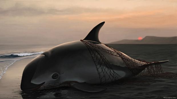 昂贵的花胶,最后的鼠海豚