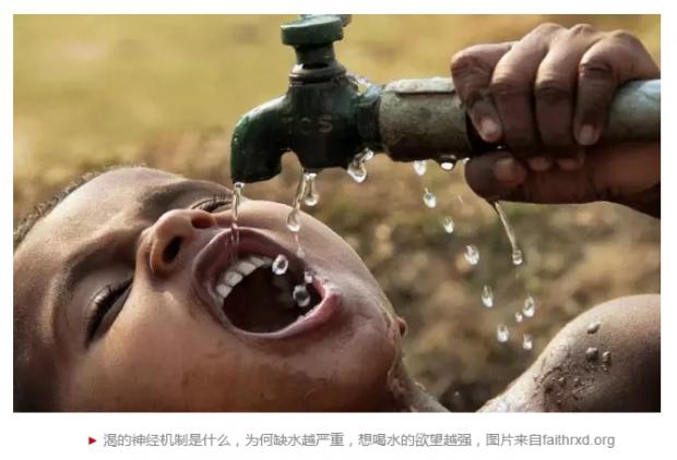 渴、渴、渴,口渴的神经基础被发现